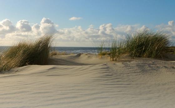 duinen 3